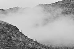 DSC_0049 saguaro east during storm bw 850 (guine) Tags: saguaronationalpark saguaro cactus plants rocks clouds bw