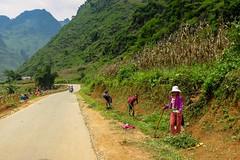 Udržovací práce (zcesty) Tags: vietnam23 silnice hory domorodci vietnam dosvěta hàgiang vn