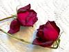 last hurrah for my Valentine roses (karma (Karen)) Tags: roses lasthurrah smileonsaturday onpurewhite hsos iphone cmwd topf25