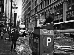 PigeonNYC (Robert S. Photography) Tags: street scene bw monochrome pigeon people winter snow melted puddle mall manhattan bus cars jacks truck sidewalk midtown city parking meter bird newyork sony dscwx150 iso160 january 2017
