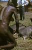 HG3-1-009b (Stichting Papua Erfgoed) Tags: henkgeut baliem varkensfeest papua irianjaya nieuwguinea stichtingpapuaerfgoed irianbarat