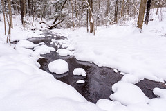 In session (Wicked Dark Photography) Tags: landscape wisconsin brook creek forest nature snow stream water winter woods