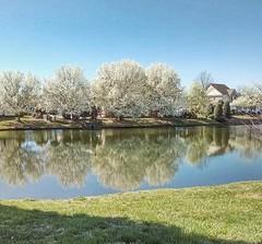 Anne's morning walk (Samuel Louis McCloud) Tags: northcarolina floweringtrees