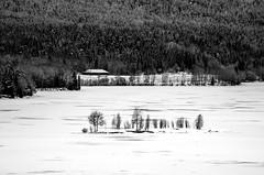 Islet in Frozen Lake (bjorbrei) Tags: winter snow ice lake shore island islet hillside forest trees spruces countryside maridalen maridalsvannet oslo norway