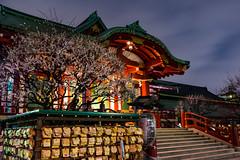 Kameido Tenjin & Blossoms (tokyobogue) Tags: tokyo japan kameido nikon nikond7100 d7100 sigma sigma1750mmexdcoshsm night evening dusk longexposure kameidotenjinjinja kameidotenjinshrine shrine shitamachi plumblossom ume blossoms