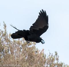_DS57171.jpg (WaterDragon3) Tags: longreef birds