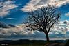 L'arbre au bord de la route en contre-jour (didier95) Tags: arbre stcrepinetcarlucet route dordogne paysage contrejour ciel nuage ure t