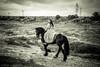 Princess (Luisa Balada.) Tags: 2017 luib luisabalada montse andy caballos infoluisabaladacom 2018