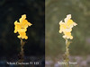 Scan Comparison (chrishoodphoto) Tags: snappysnaps cheltenham film processed out date expired snap dragons noritsu nikon coolscan iv ed