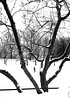 Parc La Fontaine Skating (MassiveKontent) Tags: skating park snow snowfall winter noiretblanc blackwhite montreal bw city monochrome urban blackandwhite streetphoto montréal building quebec streetphotography bwphotography streetshot