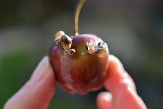 Apple of my Eyes!
