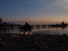 Starnbergersee (hugoholunder) Tags: starnbergersee hund steg sonnenuntergang