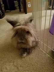 Roy (Pinky Earl) Tags: rabbit bunny bun lapin conejo usagi