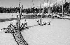 Stump Pond, Baxter State Park (jtr27) Tags: dscf7658xl3 jtr27 fuji fujifilm xt20 xtrans rokinon samyang bower 16mm f2 f20 wideangle landscape snow pond stumppond dead wood baxterstatepark maine manualfocus newengland