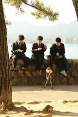 IMG_4894 (jumppoint5) Tags: group together deer miyajima urban japan hiroshima