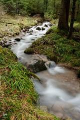Ruisseau de forêt (Vosges, France)