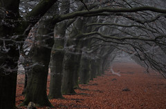 Mysterious Forest (laurahilhorst) Tags: netherlands veluwe forest winter trees mysterious clouds fog leafs autumncolors nature nikon nikond5000 hiking