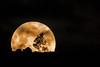 Moonrise over Mt Arawang (david.john.lee) Tags: supermoon canberra australia
