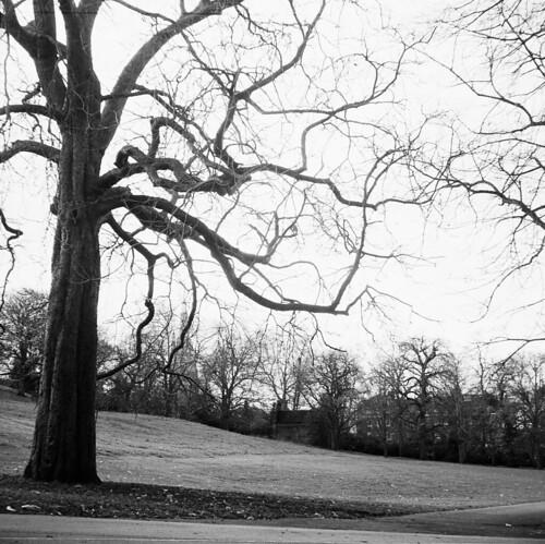 Detalje - Greenwich Park