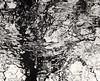 Inky Tree B&W 6 (CactusD) Tags: daeda'swood daeda's wood deddington oxfordshire england nikon d800e tilt shift tiltshift movements pce 85mmf28pce 85pce 85mm f28 fx trees water textures landscape abstract abstraction texture detail uk unitedkingdom gb greatbritain great britain movement monochrome blackandwhite bw black white woodlandtrust