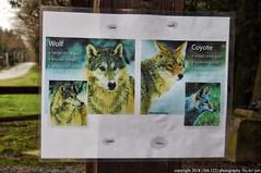 2018-02-09 Watch out for Wolves (1024x680) (-jon) Tags: anacortes skagitcounty skagit fidalgoisland sanjuanislands washingtonstate washington pnw pacificnorthwest salishsea pugetsound acfl anacortescommunityforestlands winter sign wolf wolves coyote warning cranberrylake lake trail 10 nikon nikoncoolpixl22 a266122photographyproduction coolpix l22