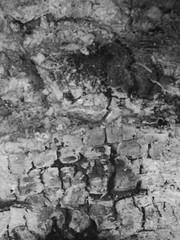 "Ashes (hp349) Tags: thursday 7dwf ashes macro ""blackandwhite"" bw"