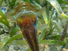 Cuttlefish (Jwaan) Tags: cuttlefish arms colorchanging ufo alien underwater squid bvi britishvirginislands westindies caribbean