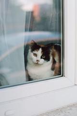 Je ne fais que passer... (tonic_witch) Tags: contaxaria film c41 kodakportra400 planart1450 chats cats