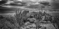 Cactus Garden and Dramatic Sky (MTD Photos) Tags: newmexico sandia sandiamountains blackandwhite cactus clouds desert landscape mattdomonkos monochrome mountain nature sky sunset