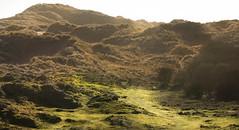 ythan_ (HallieDaly) Tags: scotland united kingdom wildlife bird ornithology british longtailed tit brambling landscape ythan estuary