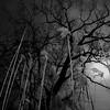 TERRA INCOGNITA (Grant Simon Rogers) Tags: grantsimonrogers ƒ artist photography artistphotographers leica leicasf40flash flasher daylightwithflash sooc straightoutofthecamera cookinginthecamera terraincognita ataleoftwocities berlin londonberlin london deutschland de europa themanwhoflashedinthegrass thefirst10000 54 blackwhite bw dayfornight therepublicofheaven photopsychotherapy individuation jungheart godisnotgreat trousersrolled treeswimming hichabitatfelicitas instagram flickr facebook twitter keepsharingthebeauty weallneedahug