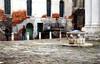 Due piccioni e una sula a Venezia (encantadissima) Tags: venezia italia piazza pozzo piccioni ragazzi scarpeblu sulauccellogalapagos colonne ponte finestre