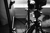 9/365 (Garen M.) Tags: nikond850 cat chip windowlight nikkor2470mmf28