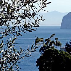 Golfo di Napoli, da Sorrento (pom.angers) Tags: april 2008 napoli naples campania italia italy sea panasonicdmctz3 europeanunion sorrento mediterraneansea golfodinapoli penisolasorrentina martirreno tyrrheniansea cliffs cliff ulivo olivetree gulfofnaples oleaeuropaea 100 200