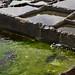 Green water terrace