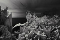 A Cold Winter Night (wilbias) Tags: toronto ontario canada lake shore long exposure ice frozen humber bay park east night monochromatic black white