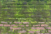 J3. Polonnaruwa - Palais Royal du Roi Parakramabahu (Darth Jipsu) Tags: mousse historic landmark srilanka parakkramabahu polonnaruwa palace unesco ceylon ruins ceylan bricks sacred wall architecture lichen weijanthapalace northcentralprovince lk cholas