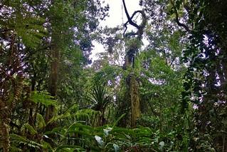 Indonesien, Java , Regenwald bei Lembang, 17134/9625