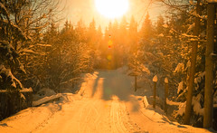 Go(lden) Norway (evakongshavn) Tags: gonorway goldenscape golden new light snow yellow winter winterwonderland winterwald winterlandscape evavision landscape landschaft paysage natur nature norge norway