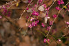 Cvetak (pseudonim.) Tags: cvet cveće ljubičasta lila priroda flora fito jesen sony dslr dslra300 a300 nature