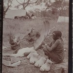 Preparing the remains of a rhinoceros and a marabu bird. Camp in the background. ; Photograph 2. thumbnail