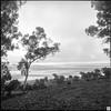 landscape (Pavel Vrzala) Tags: australia australie nsw canberra 2014 film blackandwhite bw 6x6 yashica landscape nature lakegeorge analog analogue analogphotography filmphotography lake george kodak tmax 100