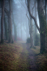 Path to Where ? (Chris-Henry) Tags: killynetherfogforest fog mist countydown ireland northernireland trees path mtstery mysterious haunting warm warmth cold winter grass colour subdued alone strange branches light landscape orange scrabo countrypark comber newtownards