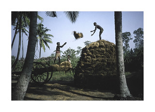 Farmers. ( Chilika lake - Orissa ) 1994