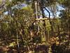 G0121312 (harleyhurricane1) Tags: line zip zipline ziplinepark dadecityflorida treehoppers centralflorida largestziplineparkincentralfl dadecity