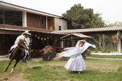 Elegancia y tradición - 1448 (Marcos GP) Tags: marcosgp lima peru baile dance chalan caballodepaso tradicion