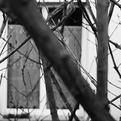 Semaine 3 / Jour 5 (melina1965) Tags: noiretblanc blackandwhite bw îledefrance valdemarne créteil hiver wintr winter arbre arbres tree trees