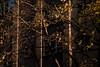 EOY.320.1_320 s.f_8.150.0 mm.4835.jpg (Jonitron) Tags: digitalphotography color tacomawa 2017 jonitron 28300mmf3556 nikon d610