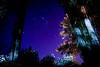 Cielo estrellado noche de verano (Javier A. Villagra) Tags: landscape paisaje serenidad paz campo airelibre planta árbol hierba nature cielo estrellas canon 800d t7i efs18135mmf3556isstm elbolson rionegro patagonia argentina