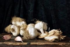 Garlic (Fabio Polimadei) Tags: stilllife naturemorte garlic food stilleben